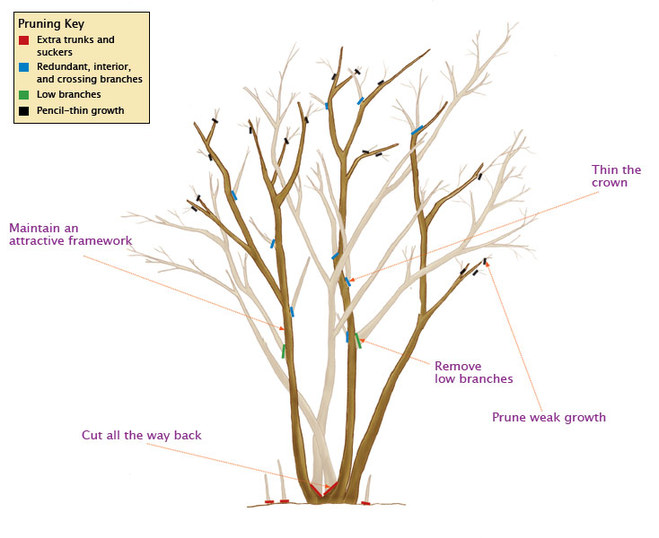 Tree And Shrub Pruning Guide Fairview Garden Center