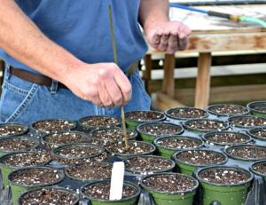 Seeding Hands