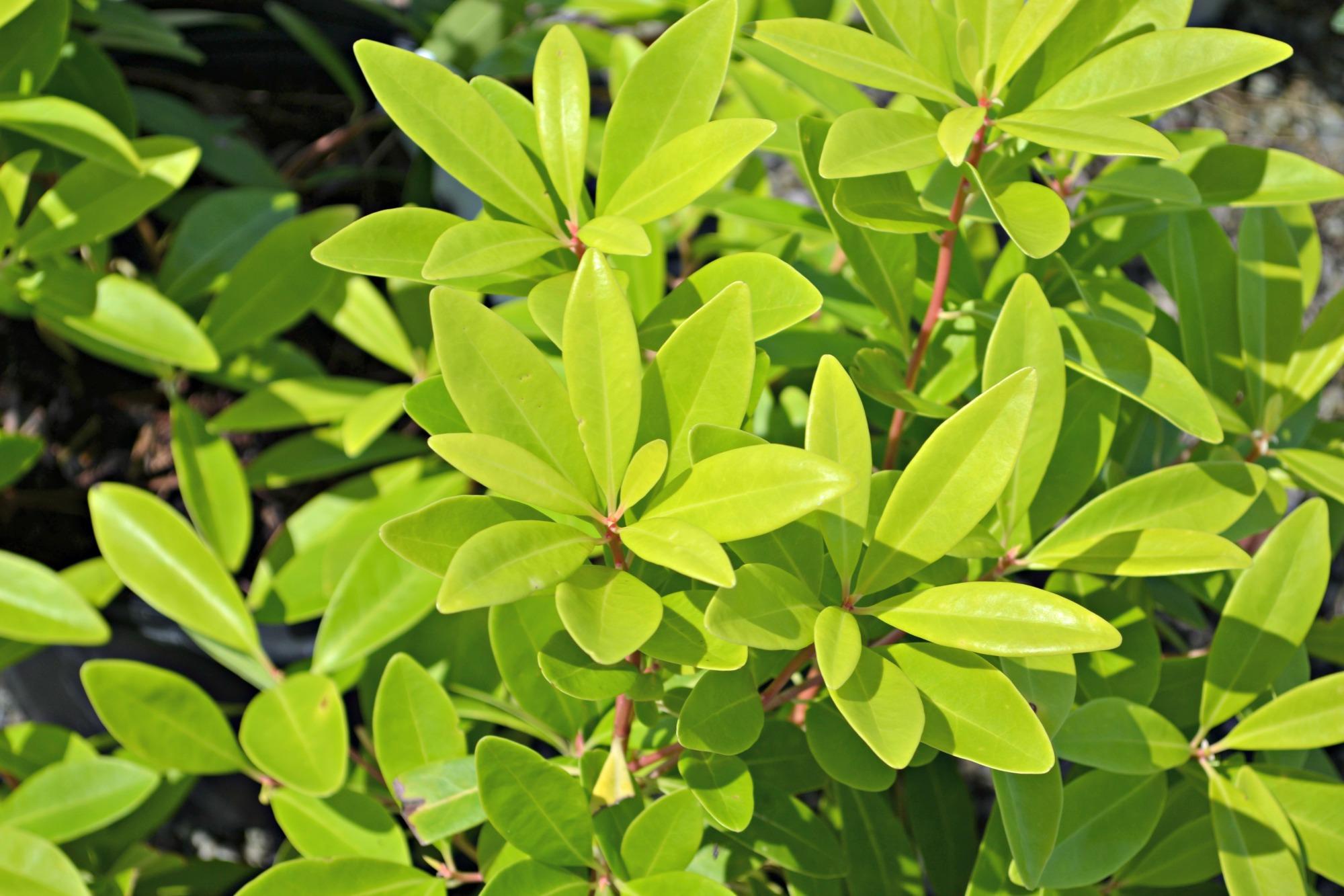 24 grandes árboles, arbustos y plantas de cama para impulsar el atractivo de la acera | NOLA.com