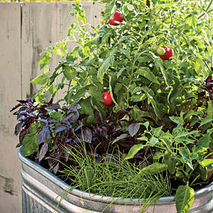 http://www.sunset.com/garden/fruits-veggies/container-vegetable-gardening-00418000067113/