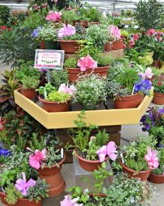 herb gardens1