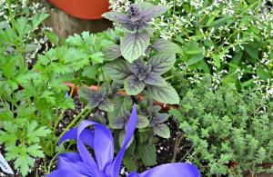 herb gardens2