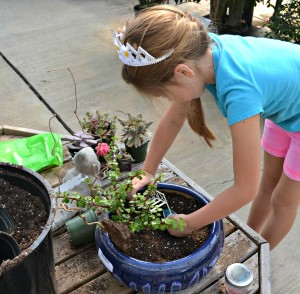 fairy planting