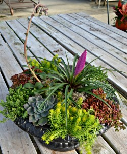 succulent3