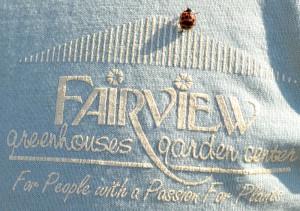 fairview ladybug 1