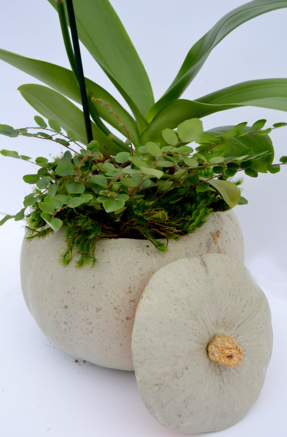 orchid pumpkin centerpiece pumpkin
