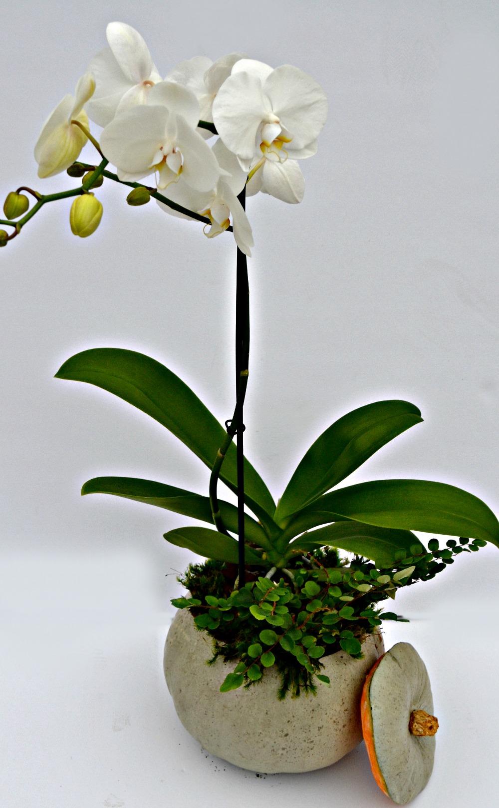 orchid pumpkin centerpiece