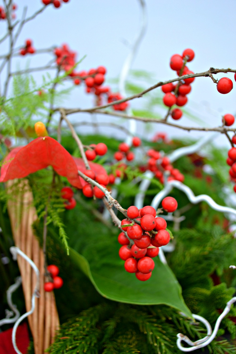 poinsettia centerpiece berries