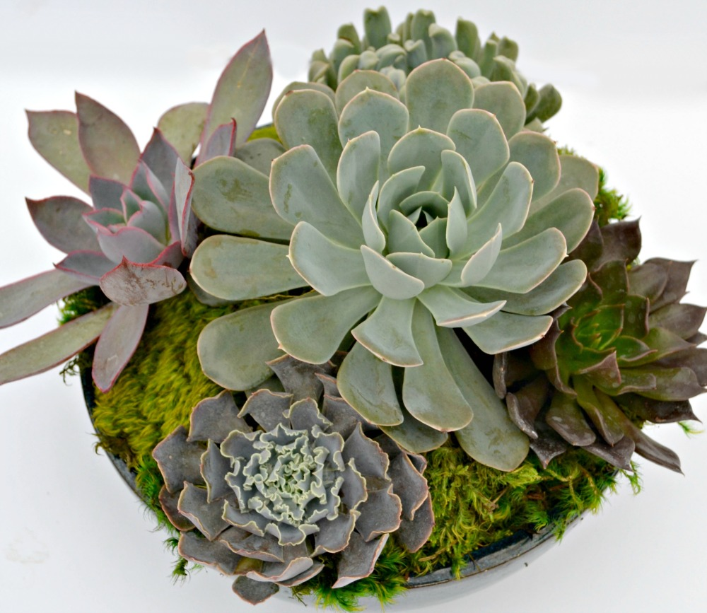 succulent centerpiece close