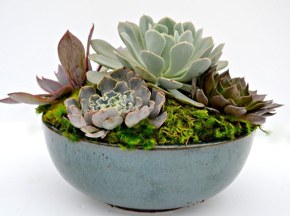 Unique Plant Centerpiece Ideas For Thanksgiving