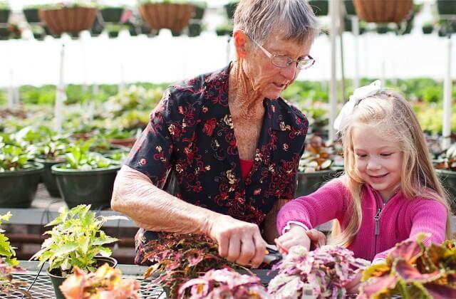 Fairview Garden Center Garden Center Plant Nursery Raleigh Nc