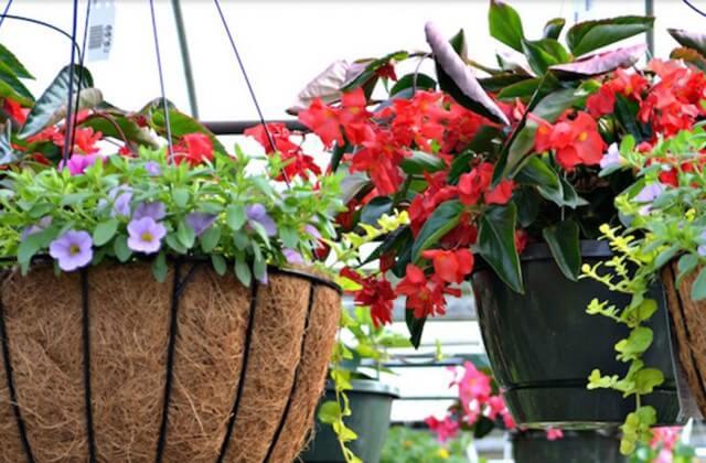 Garden Center Raleigh Fairview Garden Greenhouse NC