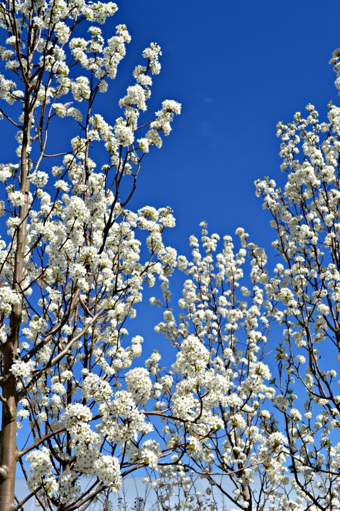 Trees & Shrubs That Bloom in Early Spring