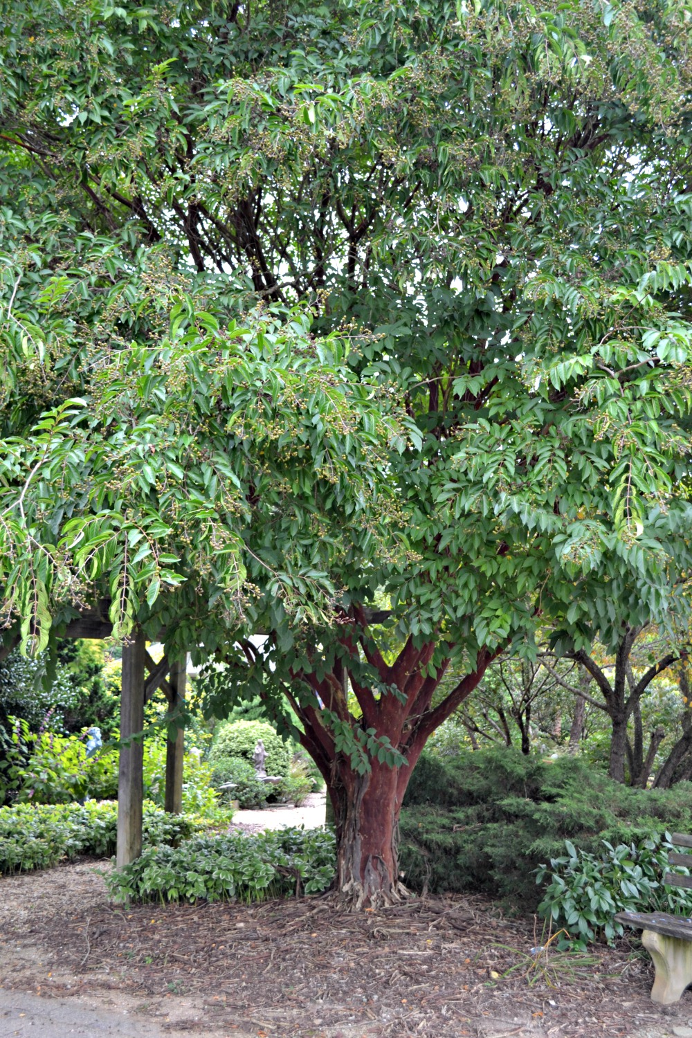 Crepe Myrtles are the Jewel of the South - Fairview Garden Center