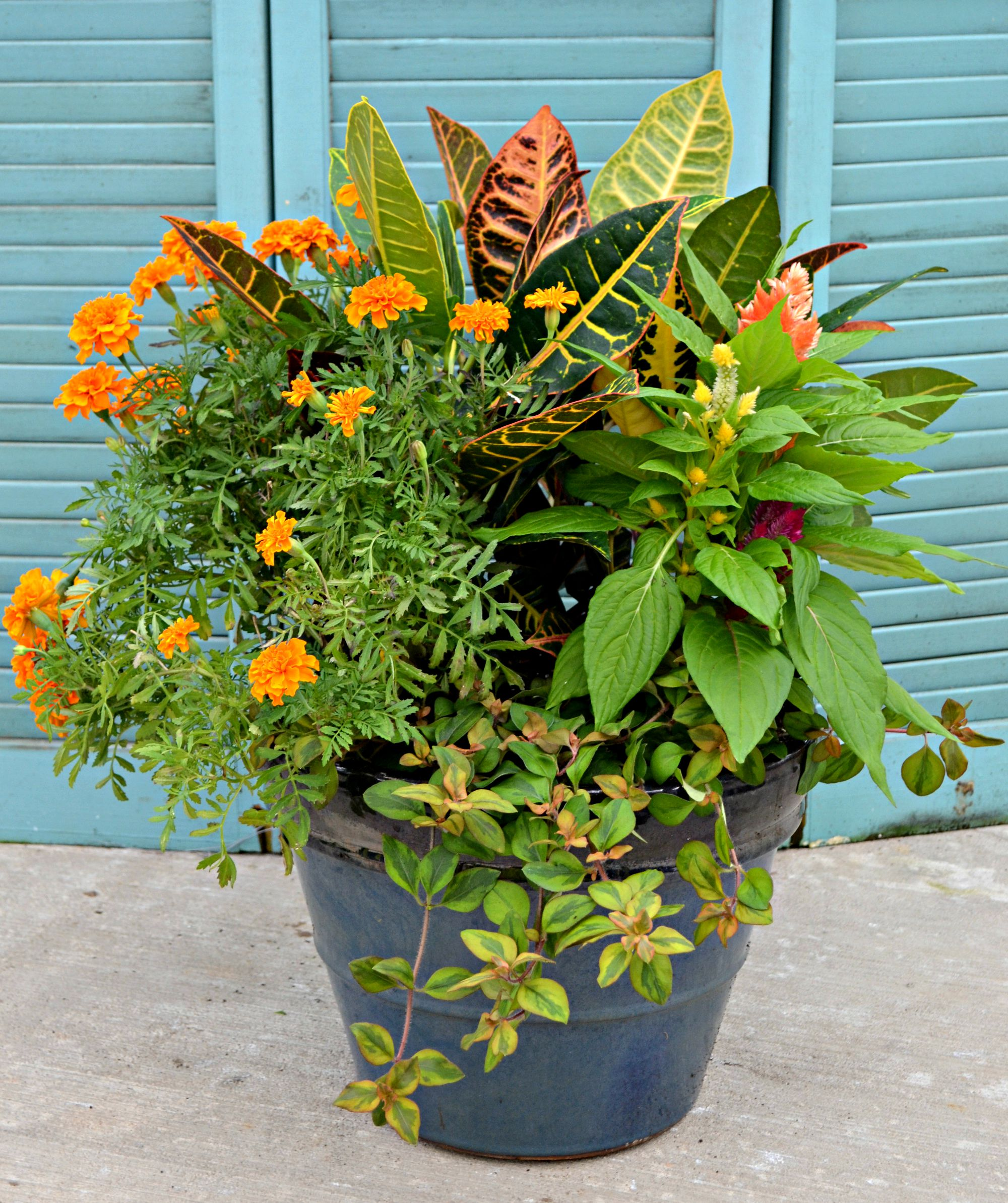 Container Garden Ideas: 4 Container Garden Ideas