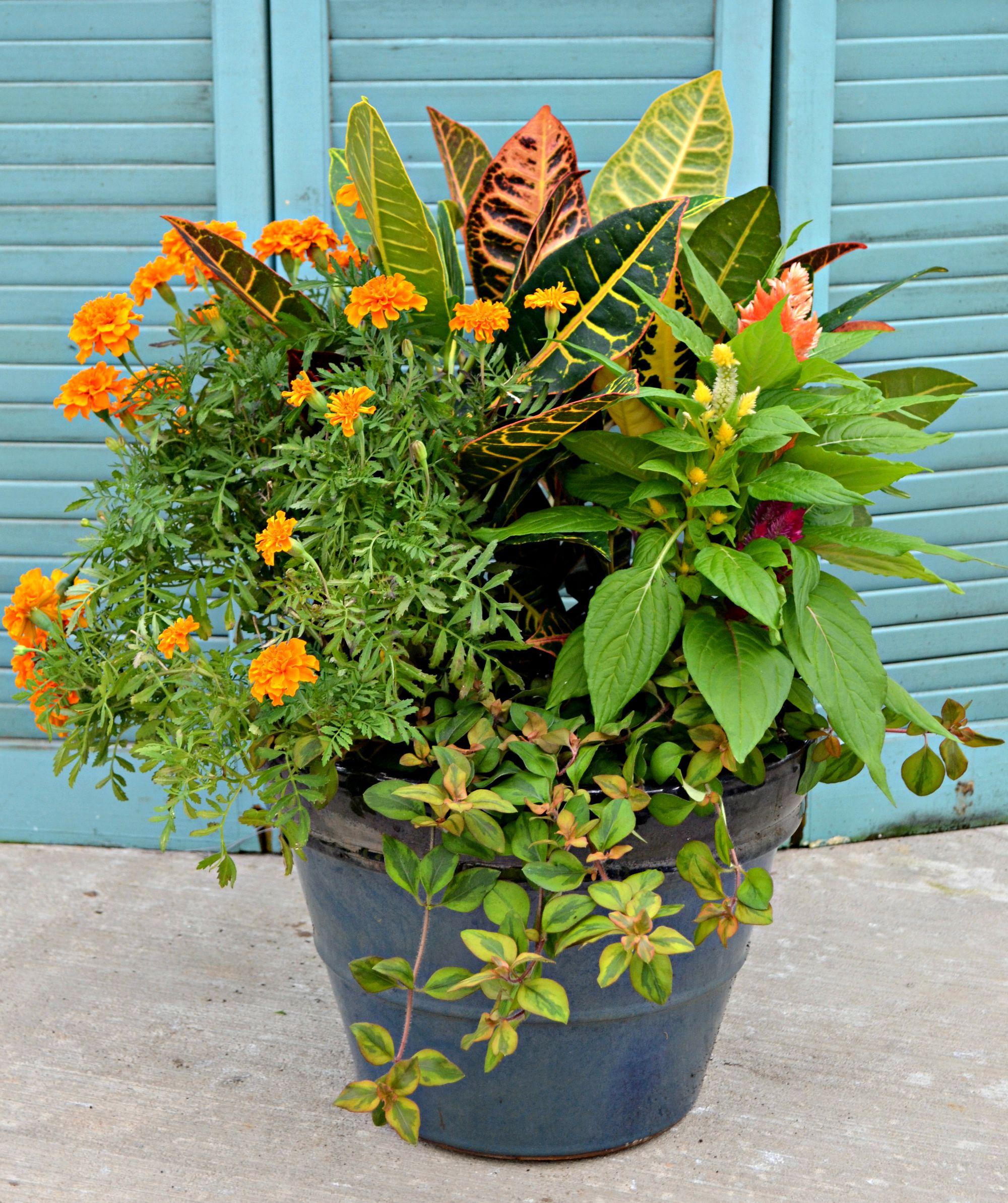 4 Container Garden Ideas Fairview Garden Center