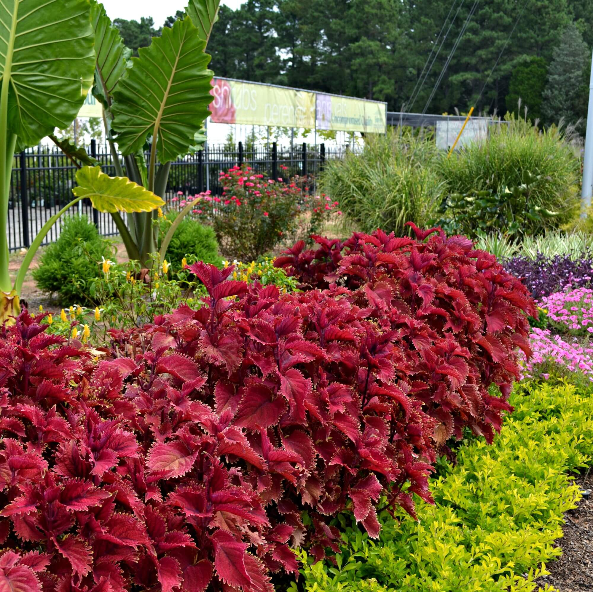 Late summer garden tips fairview garden center if you notice that some of your annual plants are not looking so stellar you may be able to give them a healthy hair cut pruning in early august and izmirmasajfo