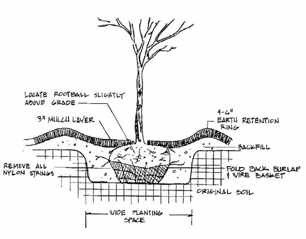 Cinco consejos para plantar hortensias