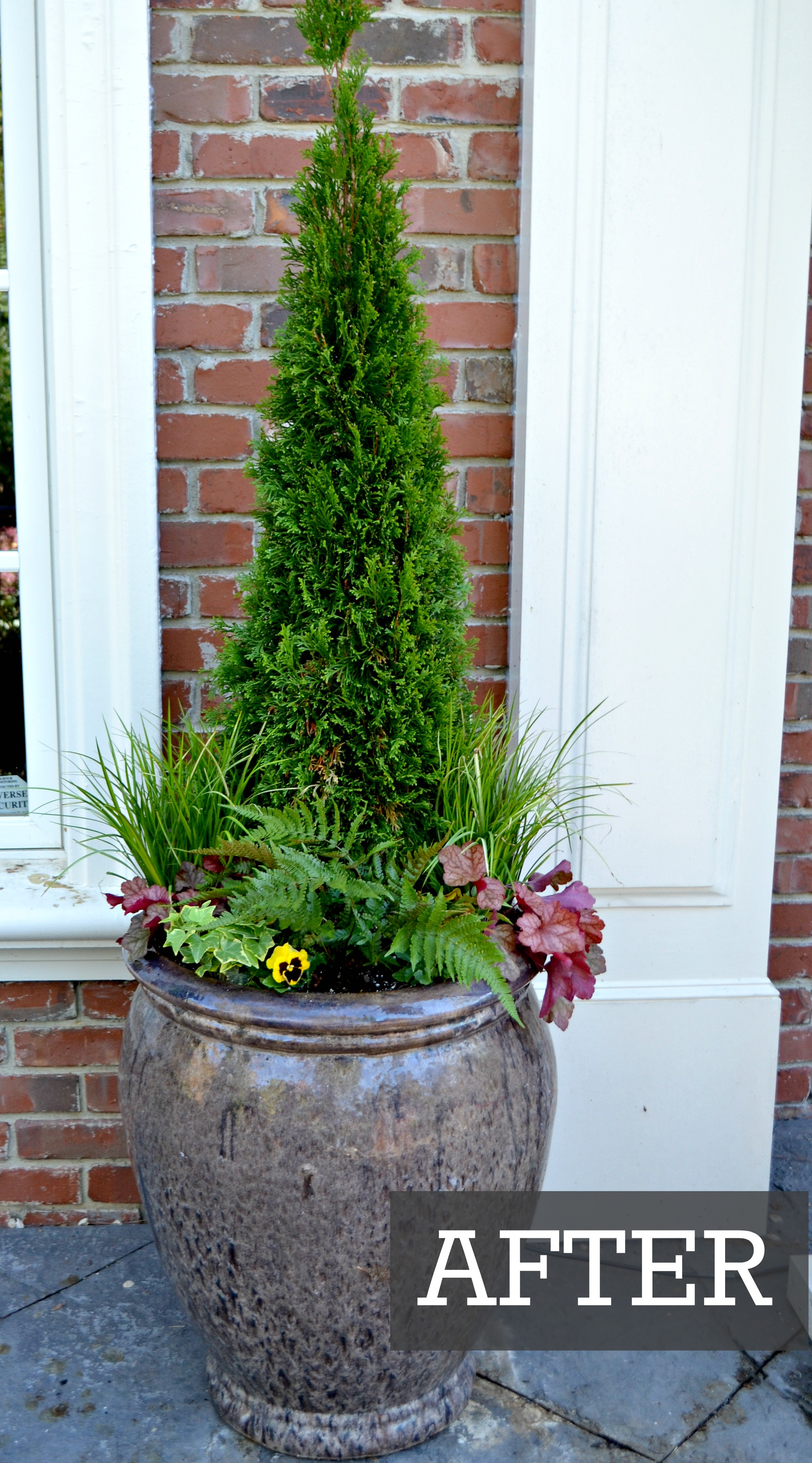 Container Garden Before and After | Fairview Garden Center
