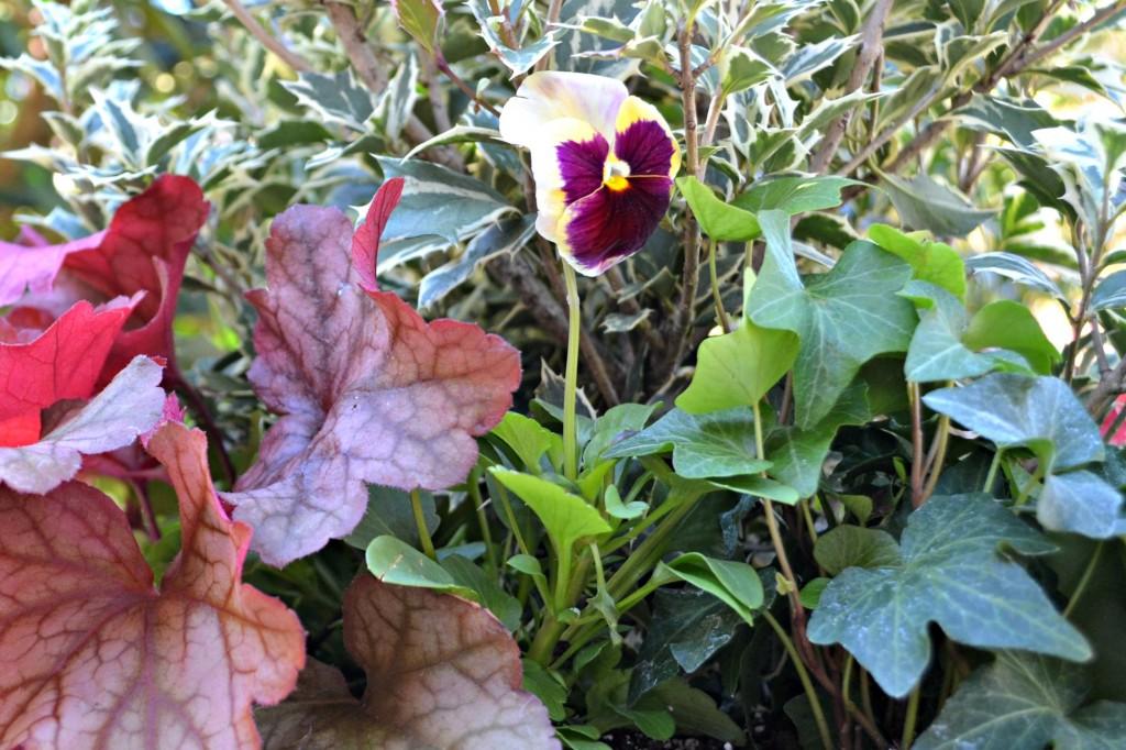 plants black close