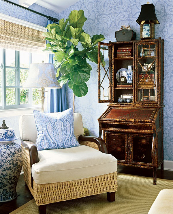 fiddle-leaf-fig-in-blue