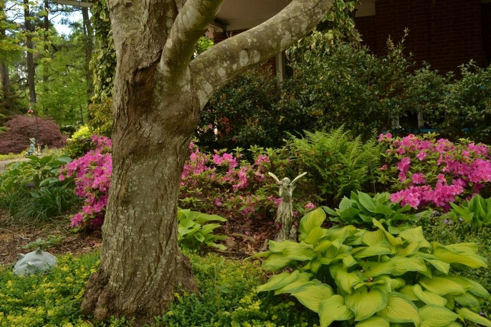 azalea hosta fern fairy