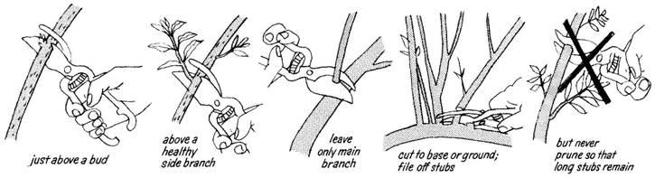 pruning-techs