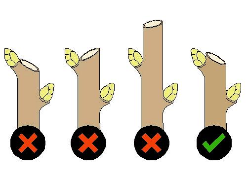 web-correct-pruning-cut