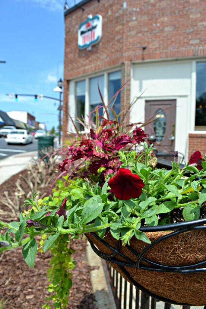 basket red petunia