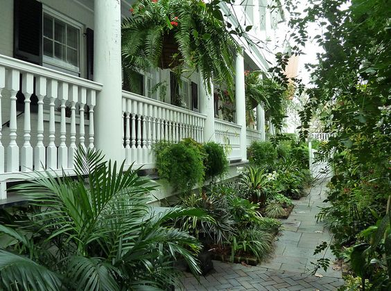5 Tips For Front Porch Ferns Fairview Garden Center
