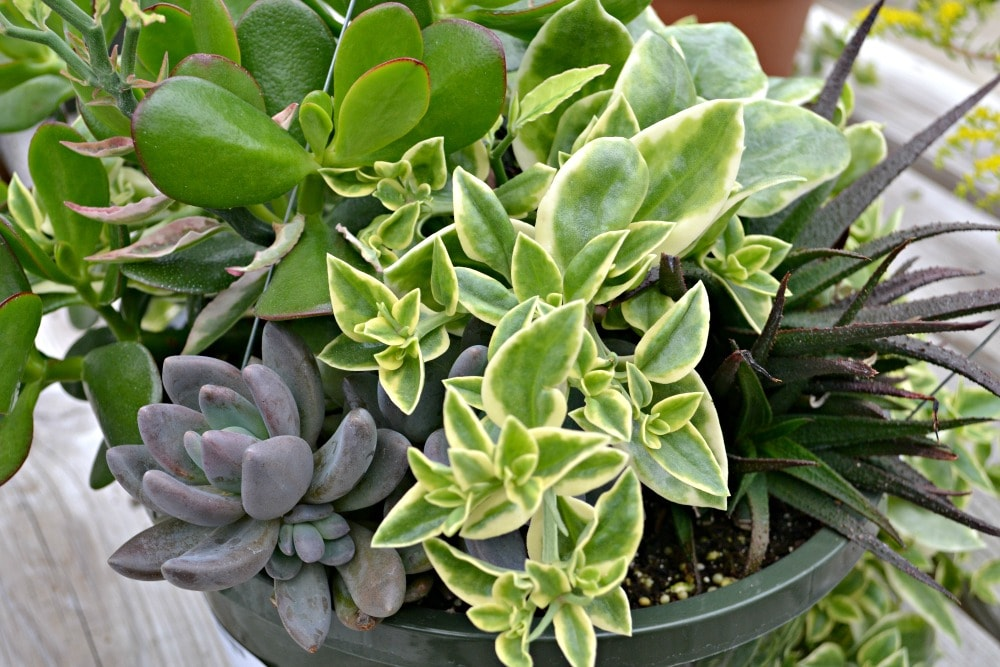 featured plant
