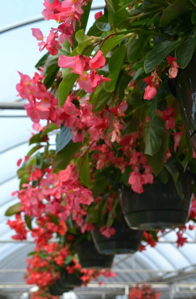 Annual Flower Pots Ideas