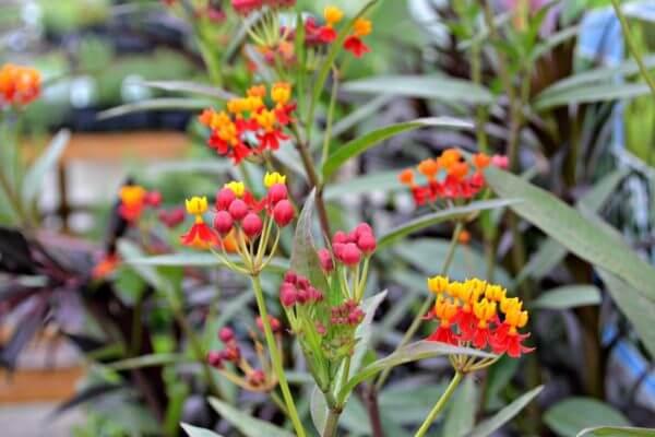 5 Hot Plants For Pollinators