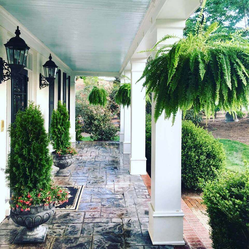 ferns on a front porch